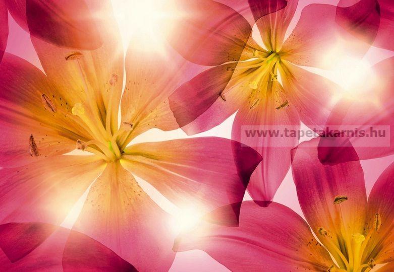 Poszter virág 8928