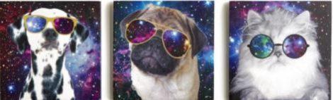 Cool kutya kép 004157