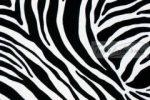 Venilia ZEBRA  11029. zebra
