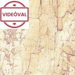 Venilia Tree shell 13774 fa minta