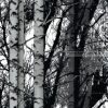 Öntapadós tapéta, erdő 200-3197
