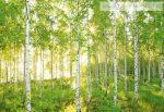 8-519 Poszter erdő.