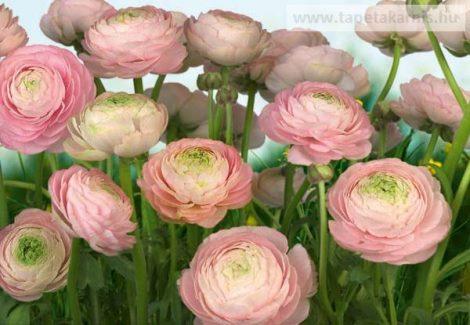 8-894 Poszter Nemes rózsa.