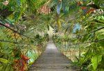 Dzsungel poszter 8-977.