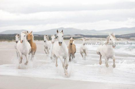 Komar poszter White Horses 8986.