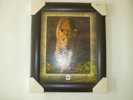 WWF Leopárd  kép