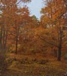 Őszi erdő óriás poszter POSZ702.