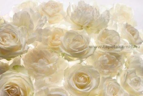 Fehér rózsa poszter xxl4-007 Shalimar.